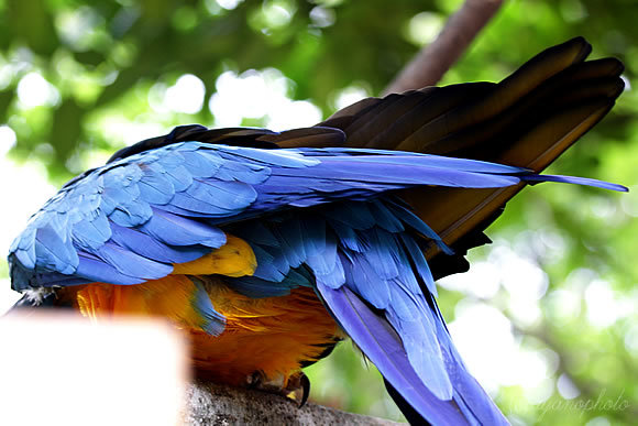 のいち動物園のルリコンゴウインコ
