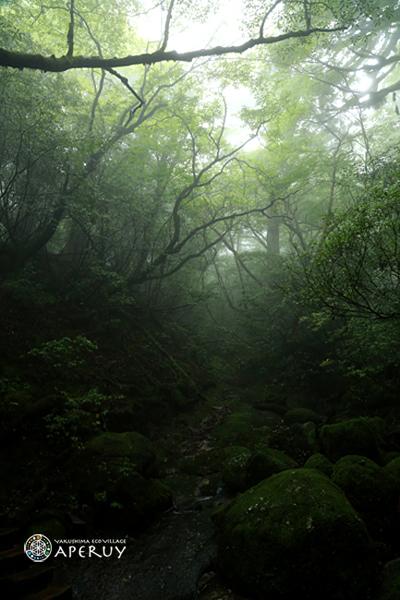 雨ちゃんの休日_f0252883_15212433.jpg