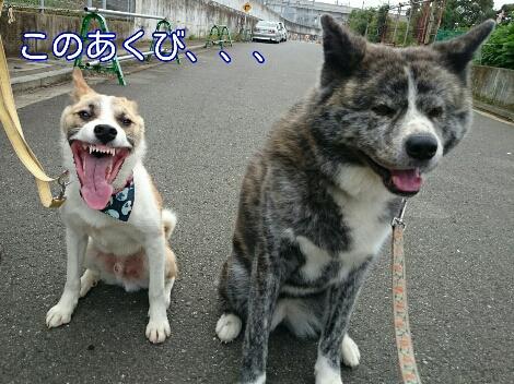 にょ!にょ!にょ!_e0297387_213769.jpg