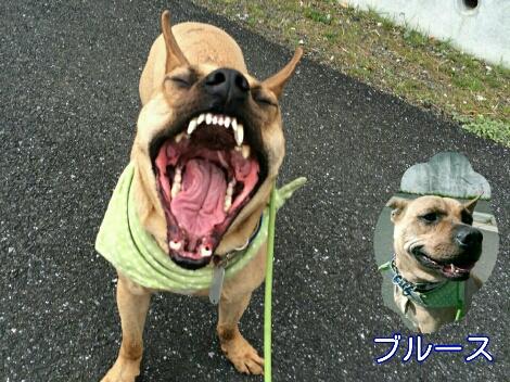 にょ!にょ!にょ!_e0297387_21393891.jpg