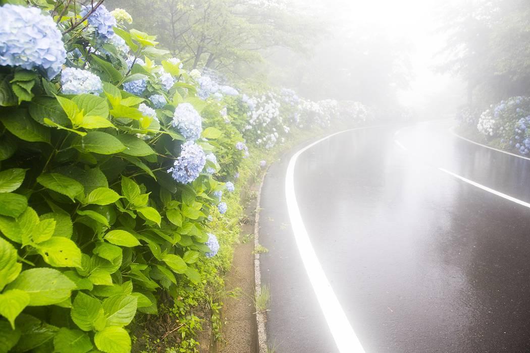 雨の紫陽花ロード_c0077395_15414347.jpg