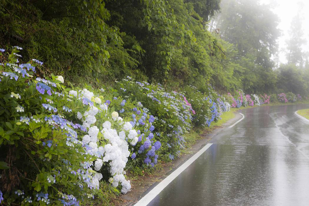 雨の紫陽花ロード_c0077395_19051773.jpg