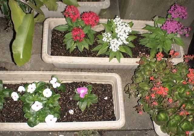 新しい花壇の仲間_d0016397_2132538.jpg