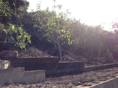 ガーデン再生プロジェクト_d0154102_11584433.jpg