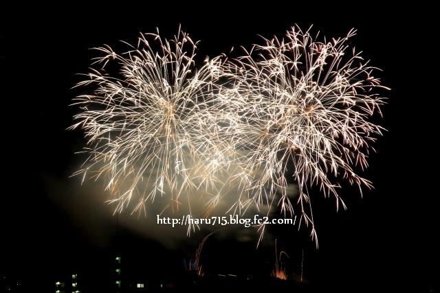 夏の夜を彩る_e0347431_11412526.jpg