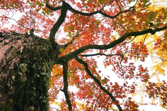 秋色 ライトアップ_e0347431_11442336.jpg