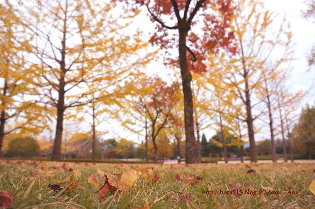 秋色 ライトアップ_e0347431_11442454.jpg