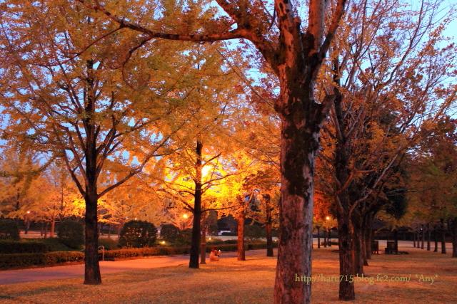秋色 ライトアップ_e0347431_11442481.jpg