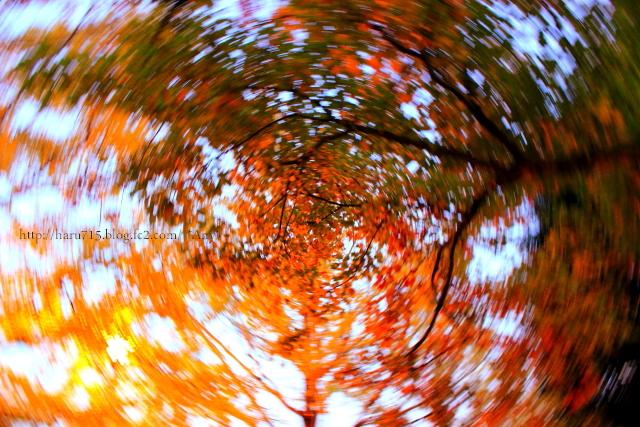 秋色 ライトアップ_e0347431_11442597.jpg