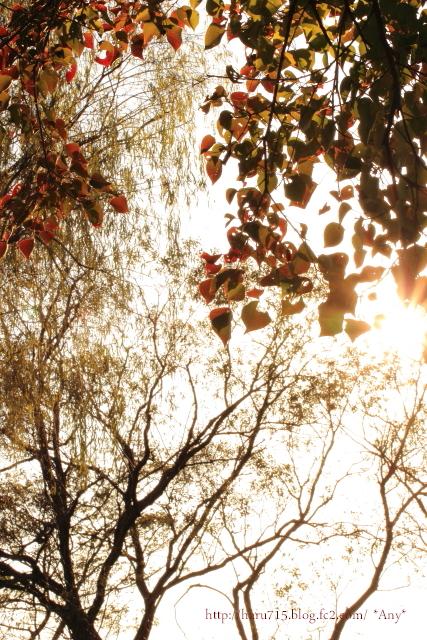 秋色溢れる_e0347431_11442739.jpg