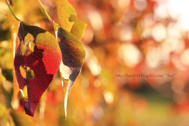 秋色溢れる_e0347431_11442766.jpg
