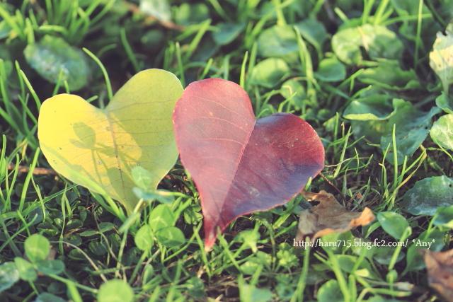 秋色溢れる_e0347431_11442790.jpg