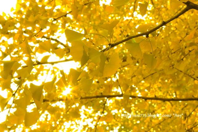 光と黄色と遊ぶ_e0347431_11443146.jpg