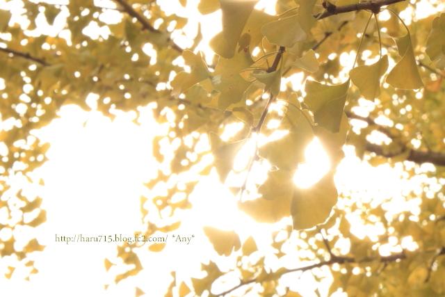 光と黄色と遊ぶ_e0347431_11443220.jpg