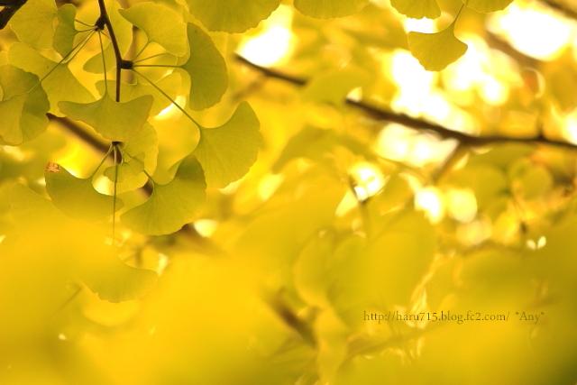 光と黄色と遊ぶ_e0347431_11443269.jpg