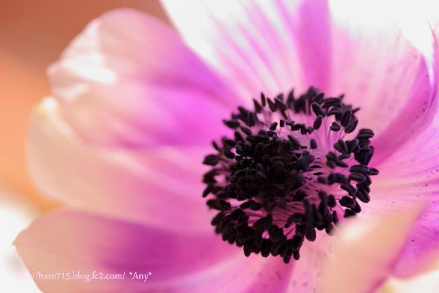 一輪の花を…_e0347431_11455503.jpg
