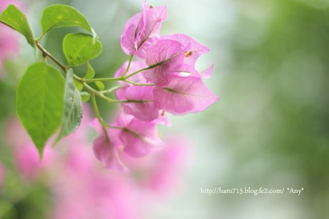 いつも咲いてる_e0347431_11463048.jpg