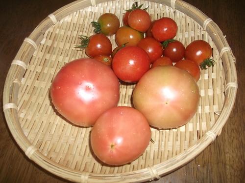 トマト&トウモロコシ_b0137932_224657.jpg