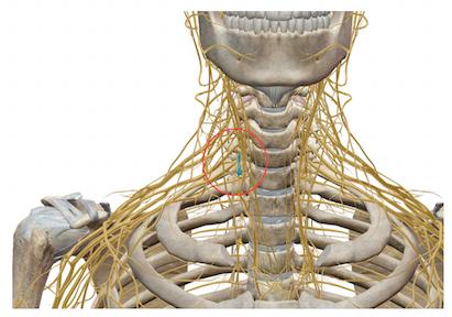 「自律神経のバランスを整える」って、具体的にどういうこと?(その15)〜ある日の施術より〜_e0073240_2283294.jpg