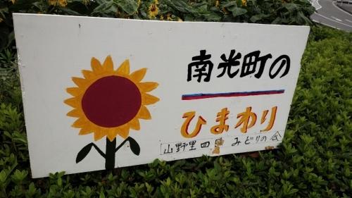 ひまわり_b0328361_22025253.jpg