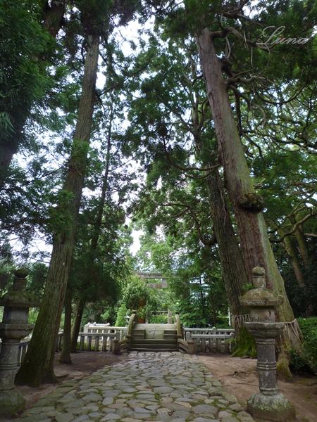 櫻井神社 岩戸開き_c0222861_22331939.jpg