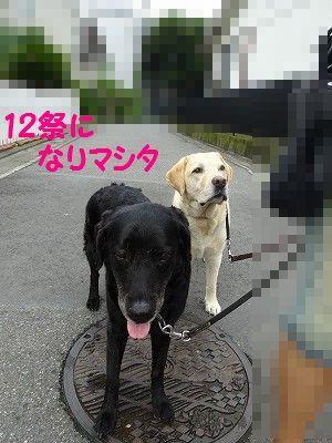 e0222588_16420377.jpg