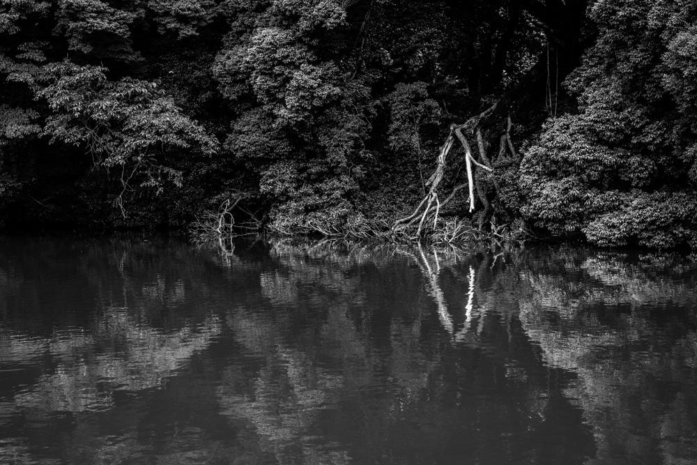 森林2_e0004009_23522.jpg