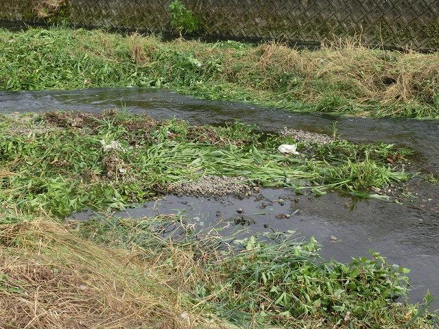 ボランティアの草刈りでは対応不可 上流から流れ込む小潤井川の土砂堆積_f0141310_7544118.jpg