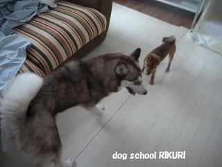 RIKURI幼稚園 ~ ふくちゃん ~_a0284100_1765226.jpg