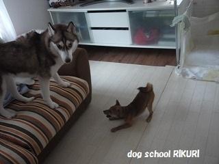 RIKURI幼稚園 ~ ふくちゃん ~_a0284100_17747.jpg