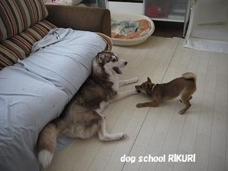 RIKURI幼稚園 ~ふくちゃん ~_a0284100_18112540.jpg