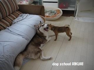 RIKURI幼稚園 ~ふくちゃん ~_a0284100_18113557.jpg