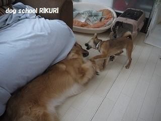 RIKURI幼稚園 ~ふくちゃん ~_a0284100_18192925.jpg