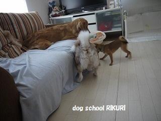 RIKURI幼稚園 ~ふくちゃん ~_a0284100_1885056.jpg