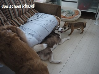 RIKURI幼稚園 ~ふくちゃん ~_a0284100_1893296.jpg