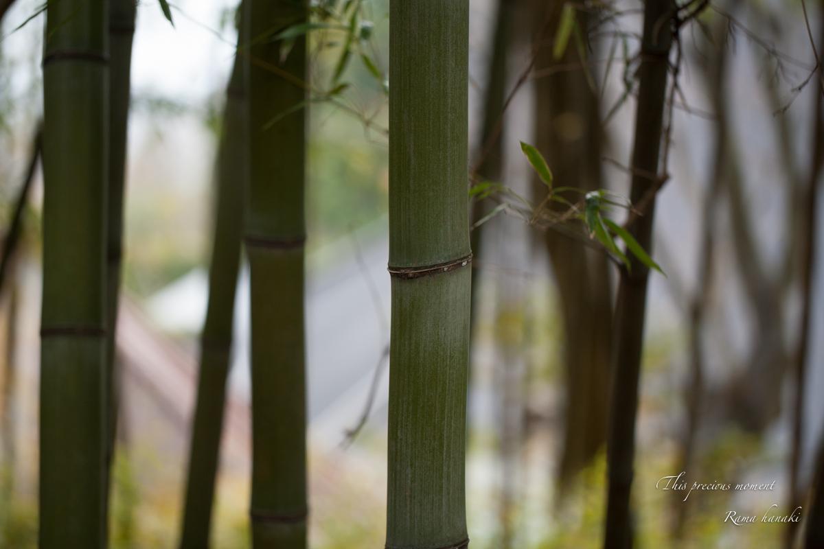春の海岸寺観音堂で_c0137403_11454485.jpg
