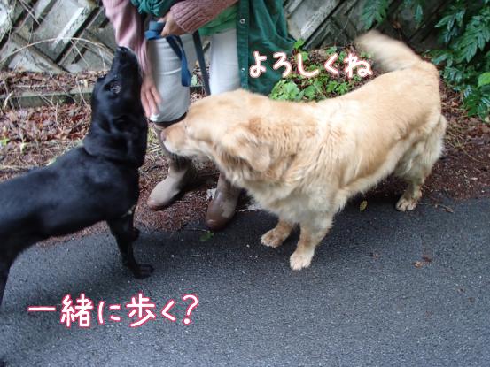 ご近所犬ニューフェイス_f0064906_17101992.jpg