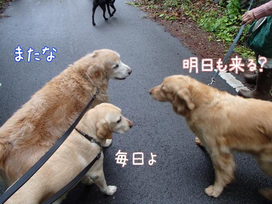 ご近所犬ニューフェイス_f0064906_17115338.jpg