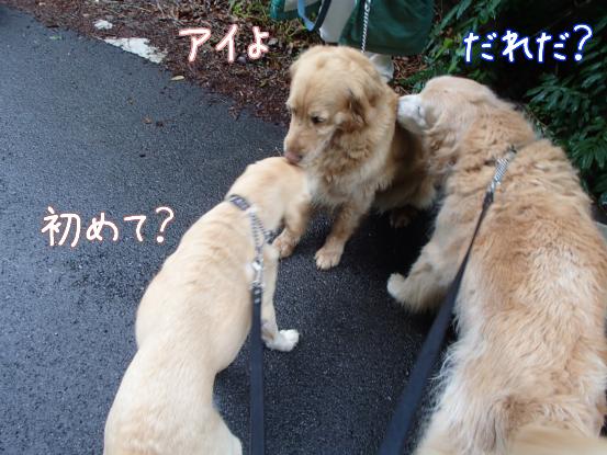 ご近所犬ニューフェイス_f0064906_1785829.jpg