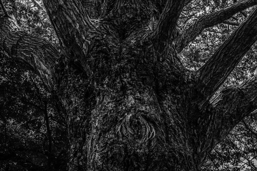 森林3_e0004009_2353025.jpg