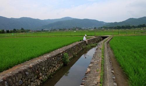 嵯峨野を歩く2 広沢の池から_e0048413_21204741.jpg
