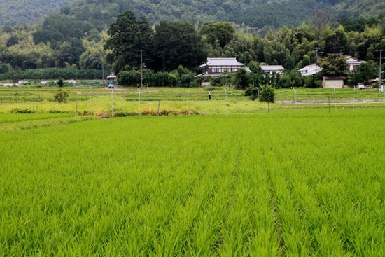 嵯峨野を歩く2 広沢の池から_e0048413_2121140.jpg