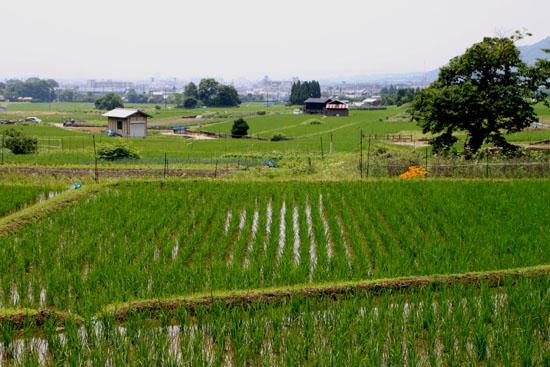 嵯峨野を歩く2 広沢の池から_e0048413_21211516.jpg