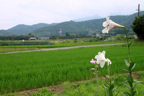 嵯峨野を歩く2 広沢の池から_e0048413_21212876.jpg