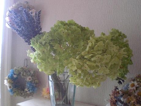 アナベル茎付紫陽花2セット_c0207719_1963384.jpg