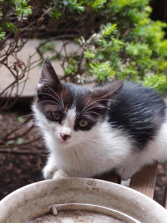 子猫の里親さんを募集しています_f0085219_21431974.jpg