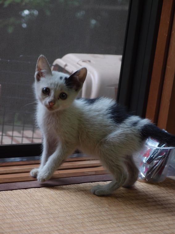 子猫の里親さんを募集しています_f0085219_21441085.jpg