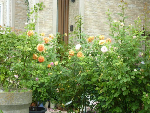 バラのお庭_f0032332_2057785.jpg