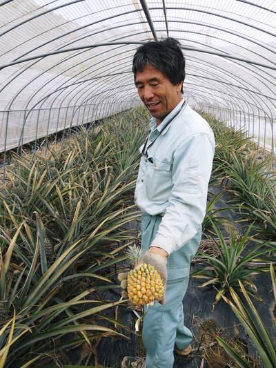 熊本県産『チヒロパイン』 8月中旬より販売予定!現地取材その2(試食してみました!)_a0254656_17242348.jpg