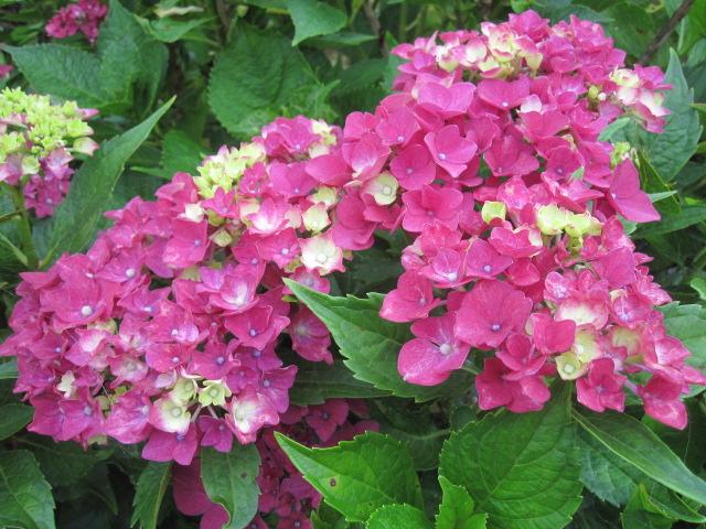 咲いていますよ。。。_f0085369_1951106.jpg